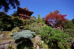 tea_garden_5013822170_o